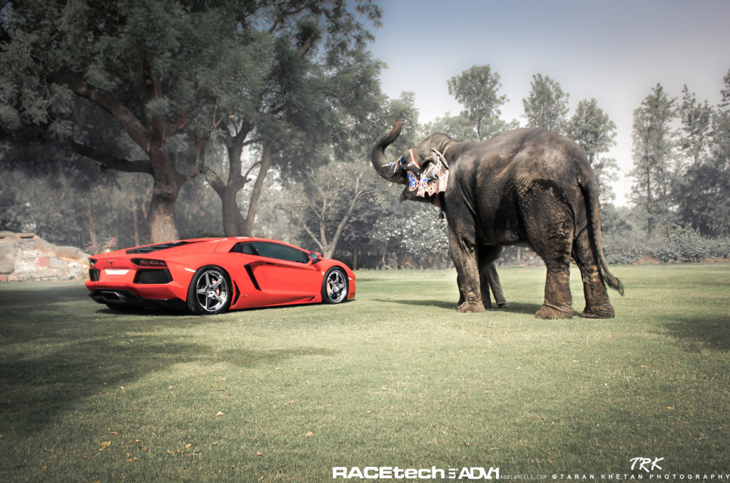 ламбо и слон